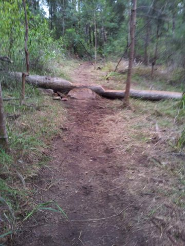 Log roll that ends (or starts) this section of XC trail.